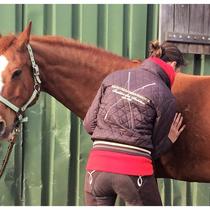 Allgemeine osteopathische Behandlung am Pferd
