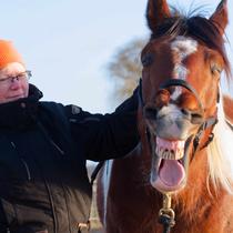 """Workshop """"Verspannungen am Pferd selber lösen"""" - lösen"""