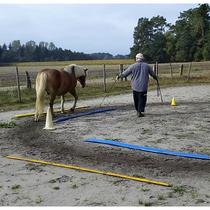 Reha-Training Pferd