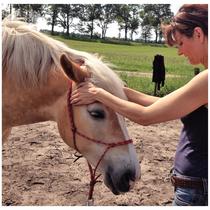 Pferde-Osteopathie bei der Haflingerstute Susi