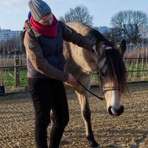 """Workshop """"Verspannungen am Pferd selber lösen"""" - begleiten"""