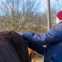 """Workshop """"Verspannungen am Pferd selber lösen"""" - fühlen und warten"""