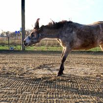 """Workshop """"Verspannungen am Pferd selber lösen"""" - genießen"""