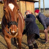 """Workshop """"Verspannungen am Pferd selber lösen"""" - hineinspüren"""