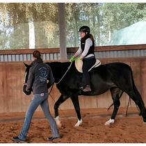Anreiten eines jungen Pferdes