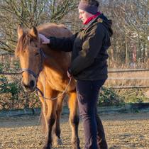"""Workshop """"Verspannungen am Pferd selber lösen"""" - einswerden"""