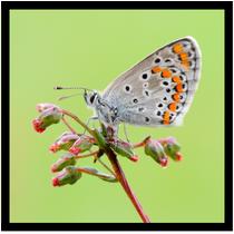 Papillon fond vert