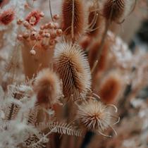 Die Blumenscheune Utphe