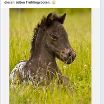 Das bekannte Pferdesporthaus Loesdau nutzt einige meiner Fotos für ihre große Facebookseite