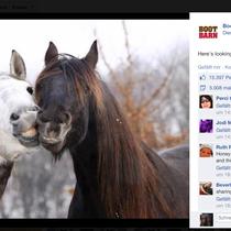 """Dieses Bild hatte auf der amerikanischen Facebookseite """"Boot Barn"""" mehr Likes erhalten, als die Busweiser Clydesdales! ;)"""
