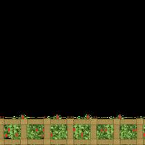 Ein Stadium im Wachstumsprozess der Beerenfarm