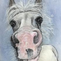 Pferdeportrait Pferd Pony Aquarell Auftragsmaler