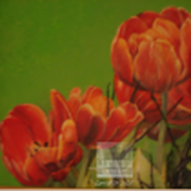Original: Country-LebensArt, BriSch, Tulpen Detail