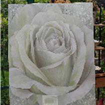 Weiße Rose, Acryl, Auftragsbild 80x100cm - vergeben