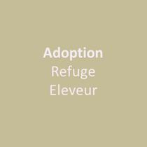 Accompagnement à l'Adoption