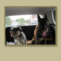 Quelles sont les problèmes comportementaux canins ?