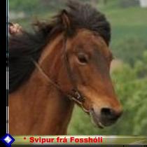 Klick für Svipur