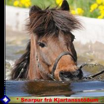 Klick für Snarpur