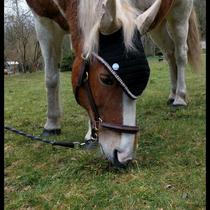 Bonnet noir, liseré beige, taille poney C (ref 111)