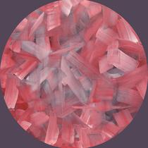 Rosa primavera. 2020. Olio su tela. diametro 50 cm
