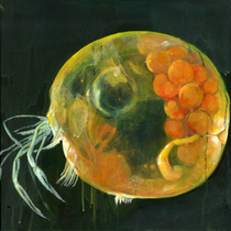 Muschelkrebs l Acryl auf Leinwand l 40x40 cm