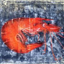 Crevette - 60,5 x 50 cm