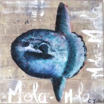 Mola Mola - 50 x 50 cm
