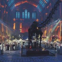 トヨタVISTAイベント at Natural History Museum|Cross Culture Holdings クロスカルチャーホールディングス|松任谷愛介 Aisuke Matsutoya
