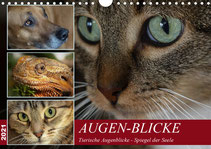 Augen-Blicke, Tierische Augenblicke - Spiegel der Seele - Kalender