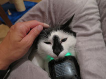 Laserbehandlung eines Abszesses