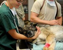 Les devoirs du vétérinaire... sur le marché du chien et du chat