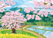 田植えと桜イラスト