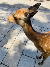 奈良公園,東大阪,河内小阪,不動産,住家,すみか,sumika,おうちの専門家