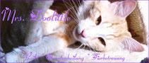 Reiki und Quantenheilung für Tiere, Tierbetreuung