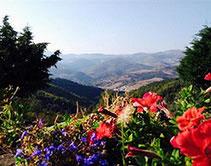 Vue du gite sur les montagnes avec en premier plan des fleurs rouges et mauves location gite en ardeche par le domaine de la gorre