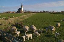 """<img src=""""image.jpg"""" alt=""""Kerkje met schapen bij Den Hoorn op Texel"""">"""