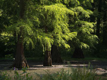 Rombergpark 2019