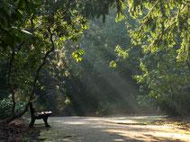 Rombergpark 2016