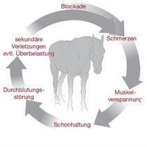 Quelle: Biomechanik und Physiotherapie für Pferde