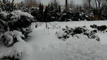 Blick in meinen Garten vom Montag den 25.02.2013 um 12:27 Uhr. Über Nacht von So. auf Mo. wieder Schneefall. Bis zu 20 cm beträgt die Naturschneedecke. Temperatur +2°C.