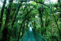Selvatura park - Monteverde