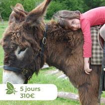 Les ânes de Madame - Balades accompagnées en Sologne, Val de Loire, châteaux de Chambord, Cheverny, Villesavin, du Moulin - Randonnées itinérantes Bien-être