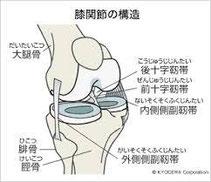 骨と靭帯の構造