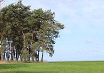 Blick über die Hügelkuppe vom Börnickenberg