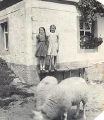 Bild: Hof Baldauf Wünschendorf