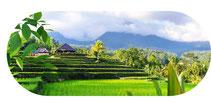 Reis, Reiskleie, Gesundheit, Vitamin E zum Schutz der Zellen