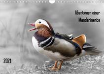 Abenteuer einer Mandarinente - Kalender