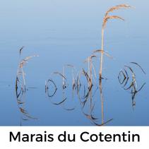 Marais du Cotentin, Normandie, Tour mit Hund