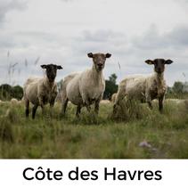 Côte des Havres mit Hund, Urlaub mit Hund in der Normandie