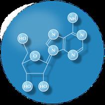 neurohormoon adenosine